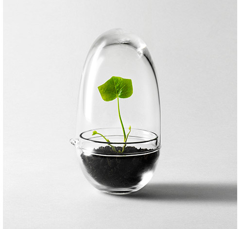 grow une mini serre pour mini plante par design stockholm house my eco design. Black Bedroom Furniture Sets. Home Design Ideas